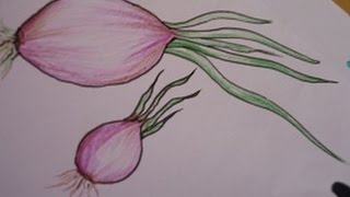 easy drawing for kids,onion drawing and shading in simple steps