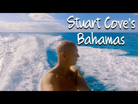 Bahamas 2019 - Snorkelling with Sharks by Kevin Williamson