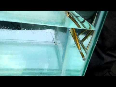 탱크어항(수조) 배설물 청소기