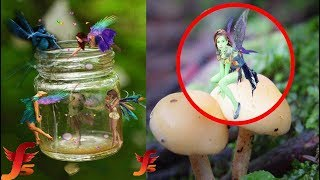Top 5 Real Fairies Caught On Camera & Spotted In Real Life Evidence...
