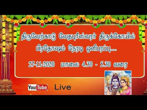 திருவேற்காடு வேதபுரீஸ்வரர் கோயிலில் பிரதோஷ வழிபாடு