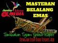 Masteran Belalang Emas Tembakan Tajam Speed Rapat Cocok Untuk Muraibatu Cucakijo Kacer Ciblek  Mp3 - Mp4 Download