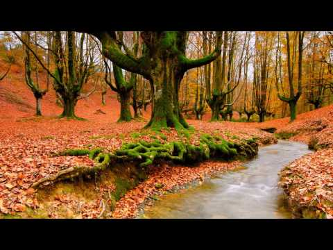 Music For Exams- Relaxing Music For Exams- Exam Music Motivation- Exam Study Music