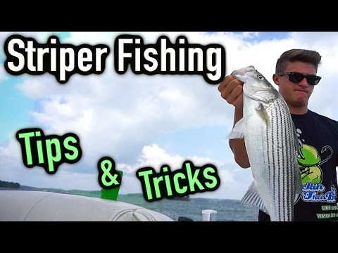 How To Catch Striper Tips And Tricks ~ Lake Lanier