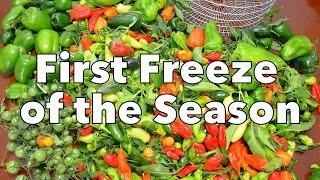Gardening: First Freeze of the Season