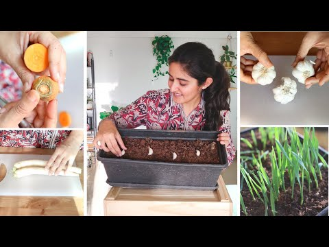 Vegetables And Herbs You Can Grow From Your Kitchen | Don't Buy Seeds