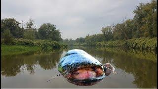Polowanie na suma z rzeki odry spinning rzeczny monster fishing river