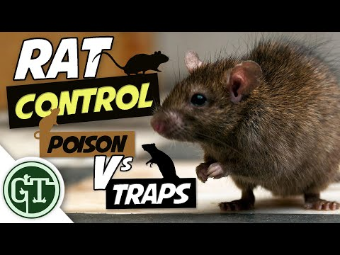 rat-control-methods---poison-vs-traps,-what-should-you-use?