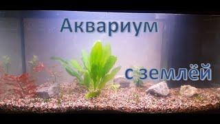 Запуск аквариума на грунте для кактусов