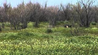 Barnes No. Utah Hog Hunt - Youth