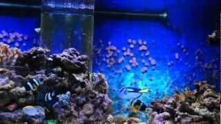 Морской аквариум Волгоград(, 2013-01-31T16:08:35.000Z)