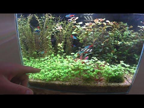 Первый аквариум/уход за аквариумом/подмены.