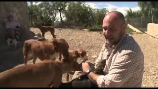 Планета Собак 18 Выпуск - Чарнего Валенсиано (Испания) / 2013