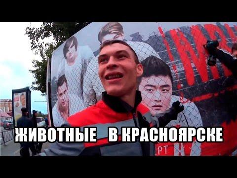 Красноярский интим магазин (секс шоп) Kras-Sex (SEX-SHOP)