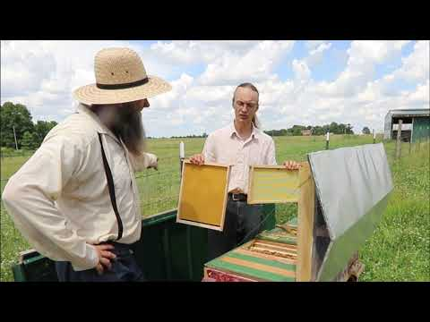American Bee hives are ALL WRONG here is why! split hives 4 weeks later