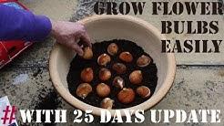 How To Grow Gladiolus/Gladioli/Gladiola Bulbs(WITH UPDATES)
