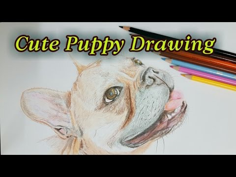 cute puppy drawing  Realistic