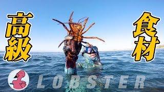 アメリカの海で水中銃撃ってきました!素潜りで初めての魚突き。ロブス...