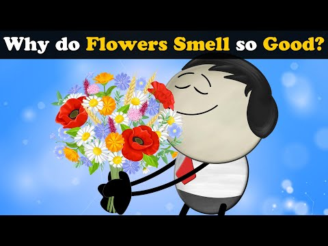 Why do Flowers Smell so Good? + more videos   #aumsum #kids #science #education #children