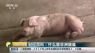 [中国财经报道]财经百科:什么是非洲猪瘟| CCTV财经