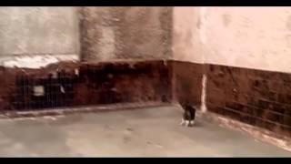 Приколы 2016! Смешные коты бояться мышей