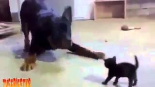 Приколы !!! Огромная собака против новорожденного котенка