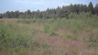 Bij Wateren Drente 2 sept 2012