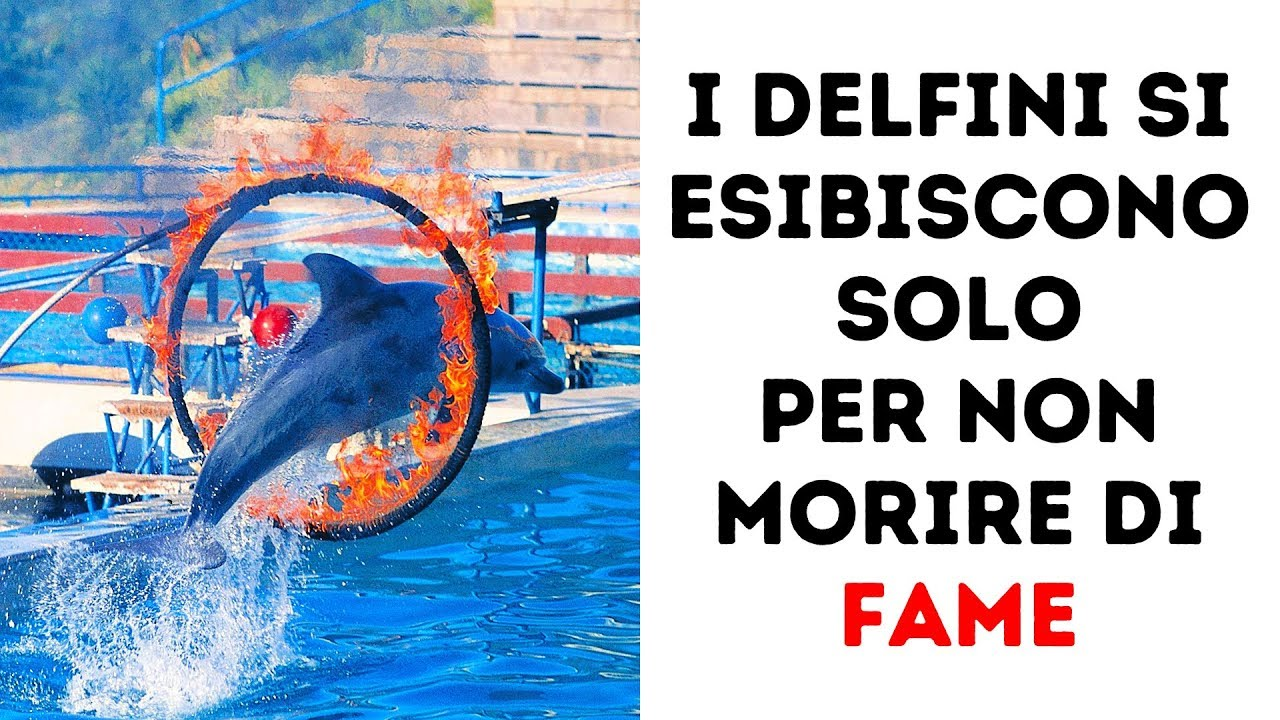 8 Motivi per Non Vedere più uno Spettacolo con i Delfini