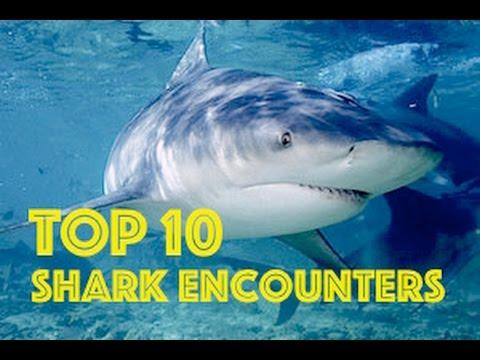 TOP 10 Shark Encounters HD - Episode #1   Shark Week 2015