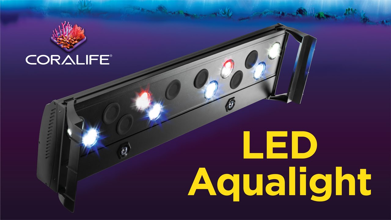 Coralife LED Aqualight  sc 1 st  YouTube & Coralife LED Aqualight - YouTube