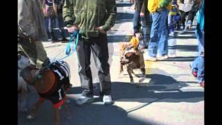 Oct 2, 2011 Pet Parade