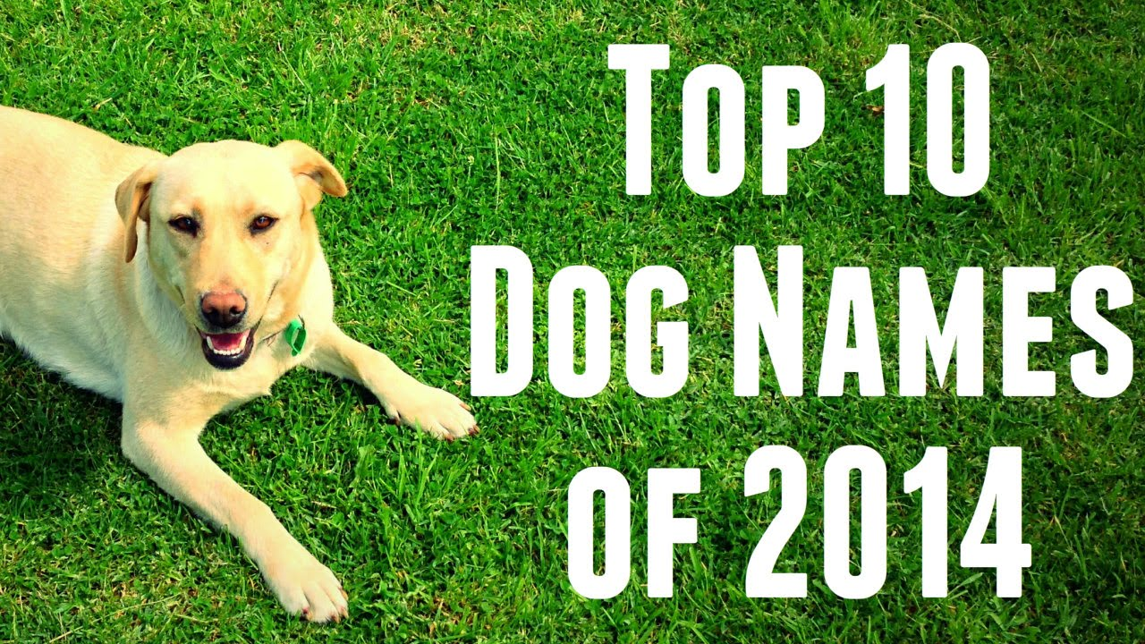 Dog Names: Top 10 Dog Names Of 2014