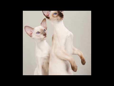 The Most Popular Cat Breeds