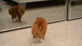 кот боится зеркало