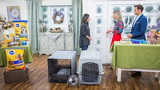 Welcoming a New Dog Into Your Home - Home & Family