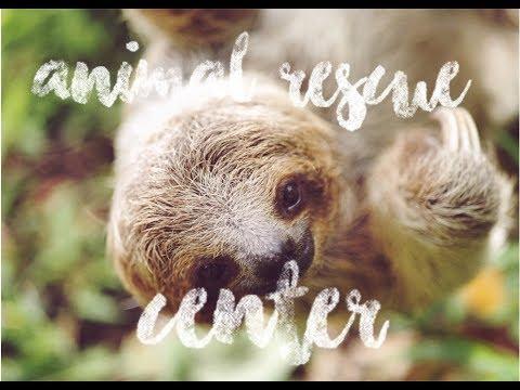 Exploring Costa Rica: One day at Costa Rica Animal Rescue Center #2017