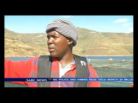 Lesotho's sushi export business profitable
