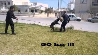 K-9 Training Rottweiler Tunisia