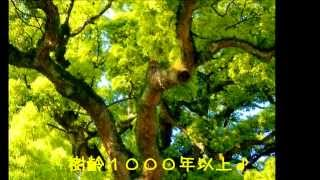 四国(香川県)総本山善通寺 第75番礼所に行って来た~♪