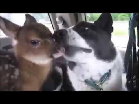 Deer loves her new Dog friend ..