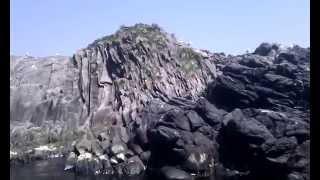 Курильские Острова - в море Видео №13 - чаячьи яйца(, 2015-07-21T00:40:32.000Z)