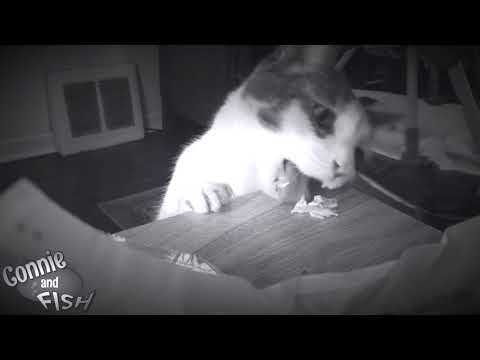Baby Charlotte & Moochin The Cat - Connie and Fish TV