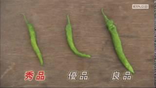2018年7月放送 「JA京都 伏見とうがらし 大江さん(京都市)」 4年前に、...