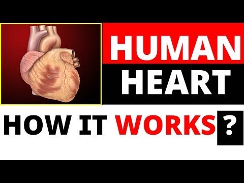 Human Heart | How it works , all mechanism and process explained : Biology for SSC , NDA , CDS Exam