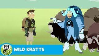 Wild Kratts: Headbutt Fight thumbnail