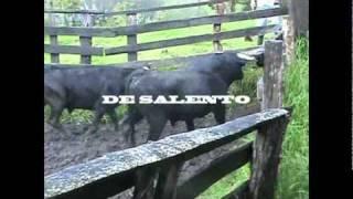 Del Campo a la Plaza: El embarque de los toros.