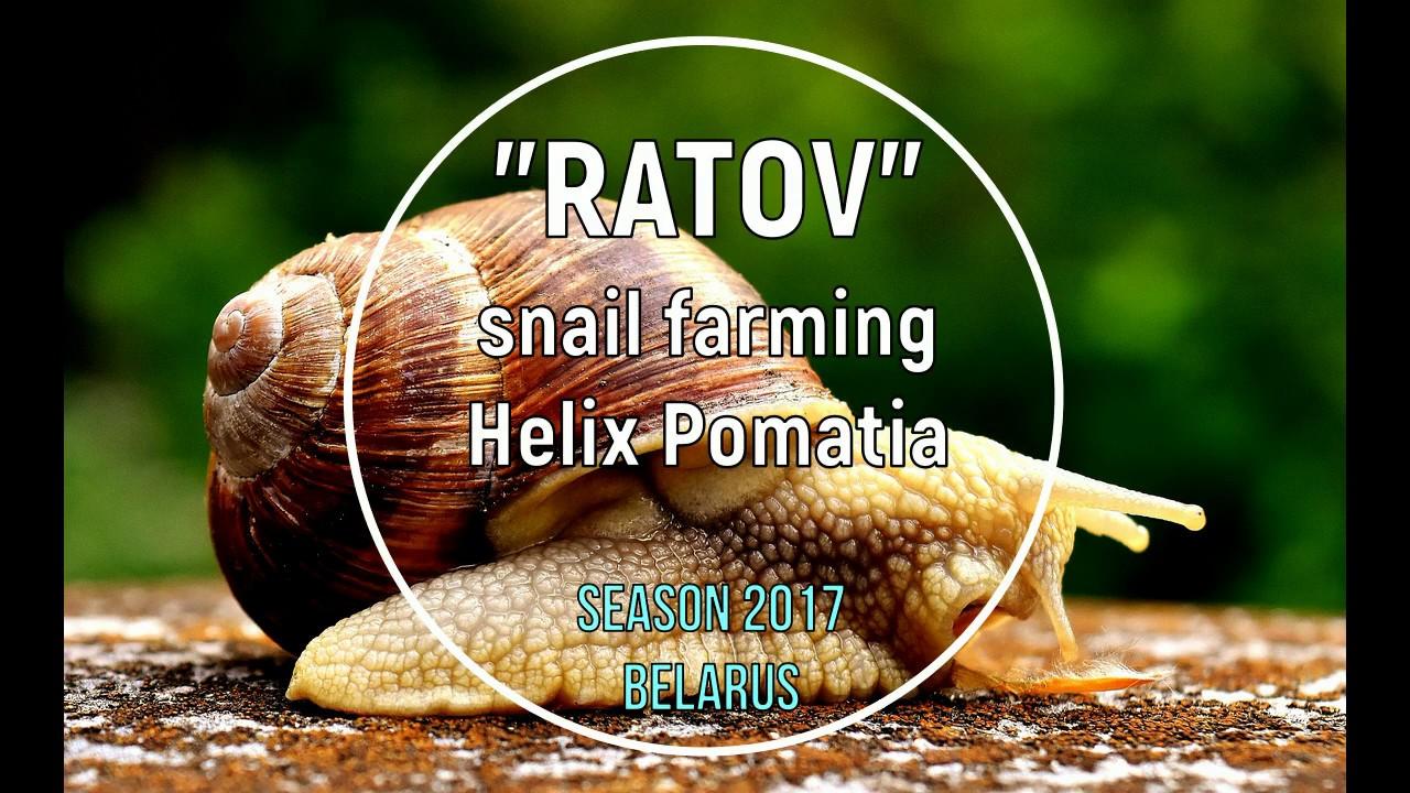 snail faming