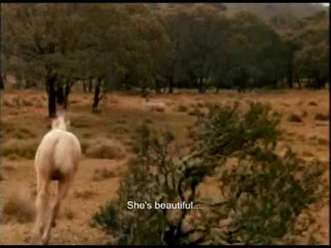 The Silver Stallion - Black Beauty Theme