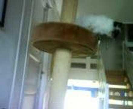 morsom katt :)