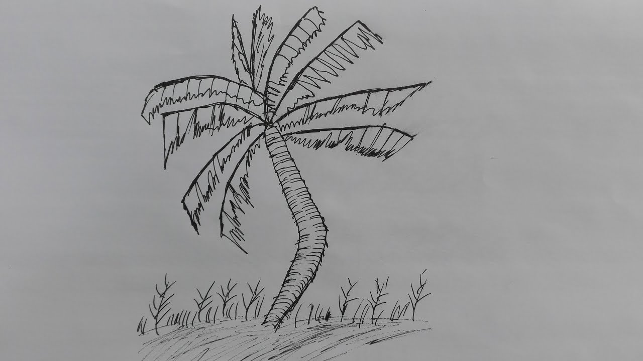 How to draw a coconut tree pencil drawing of coconut tree coconut tree drawing picture